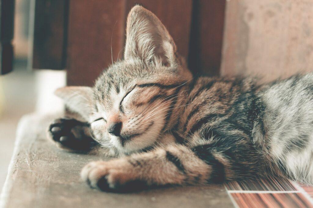 S. Sleep